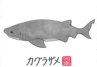カグラザメ