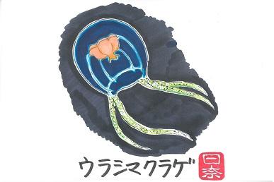 ウラシマクラゲ