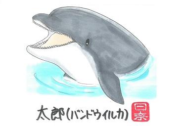 太郎(バンドウイルカ)