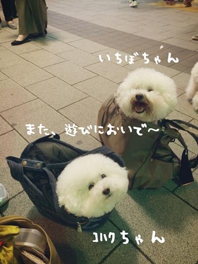 IMG_6149.jpg