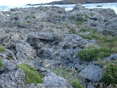 6隆起珊瑚礁