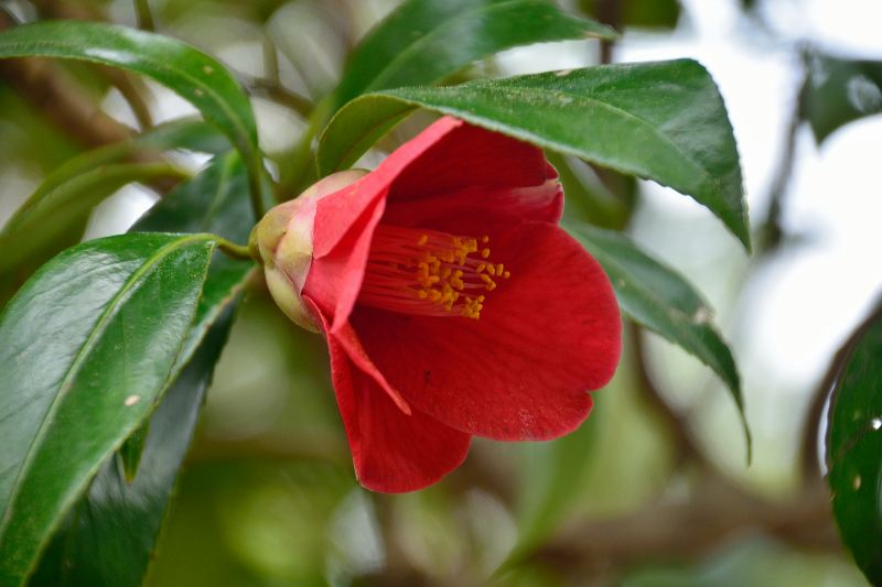 英彦山の花 (2)