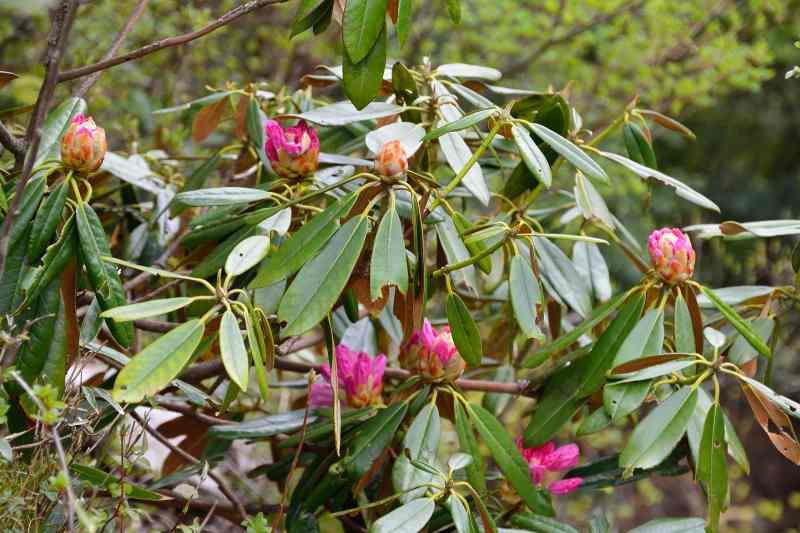 英彦山の花 (3)