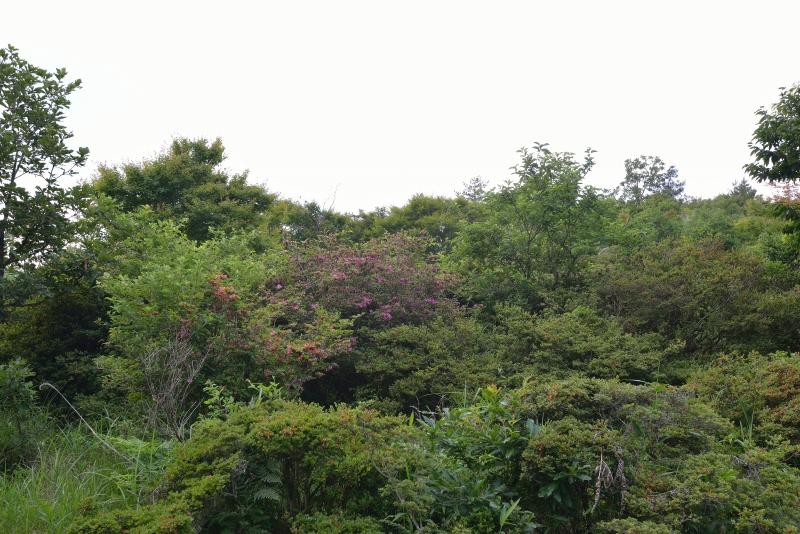 亀石山 (7)