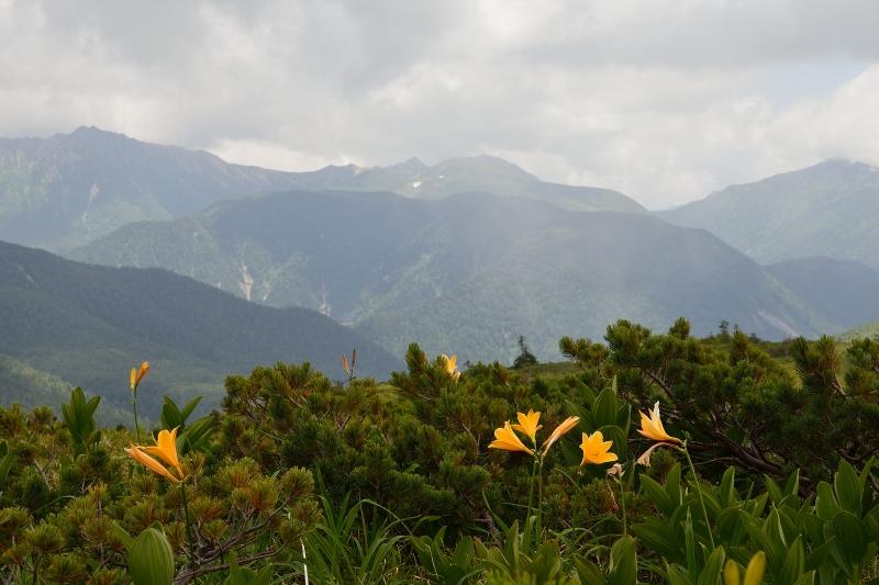 北アルプスの花 (55)
