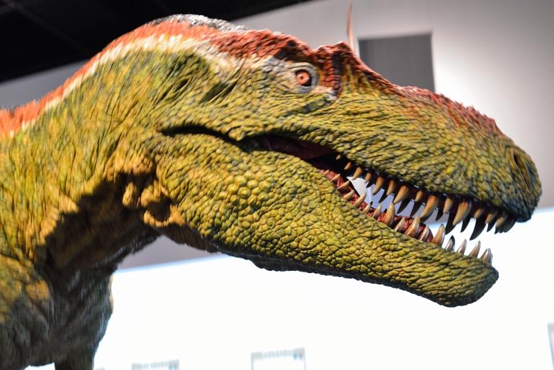 恐竜博物館 (6)