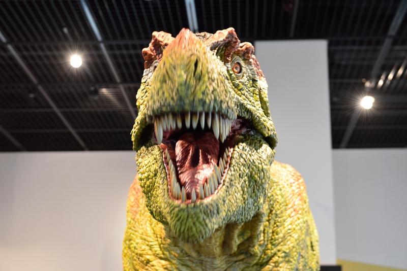 恐竜博物館 (5)