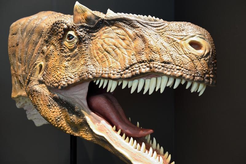 恐竜博物館 (2)
