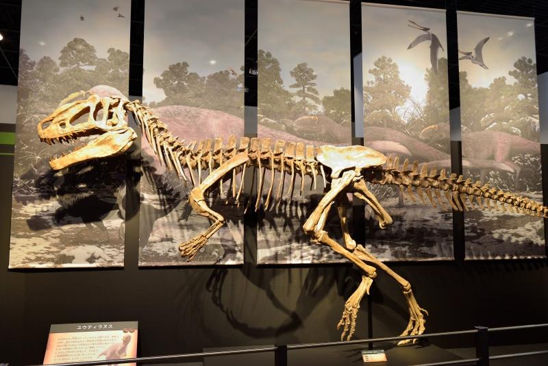 恐竜博物館 (3)