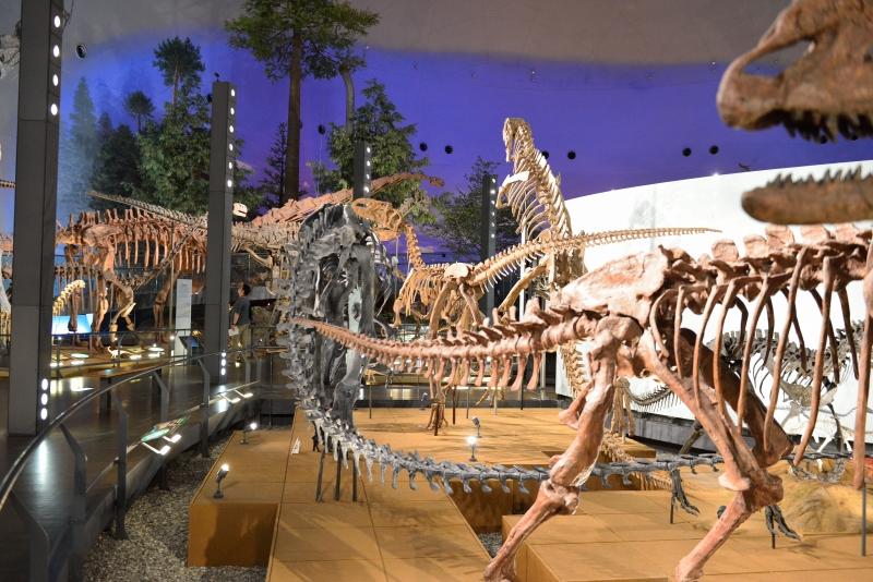 恐竜博物館 (12)