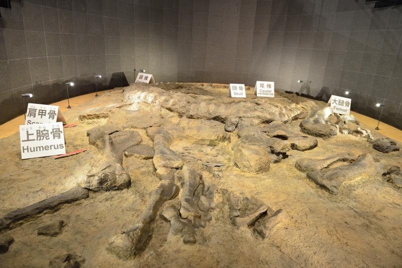 恐竜博物館 (10)