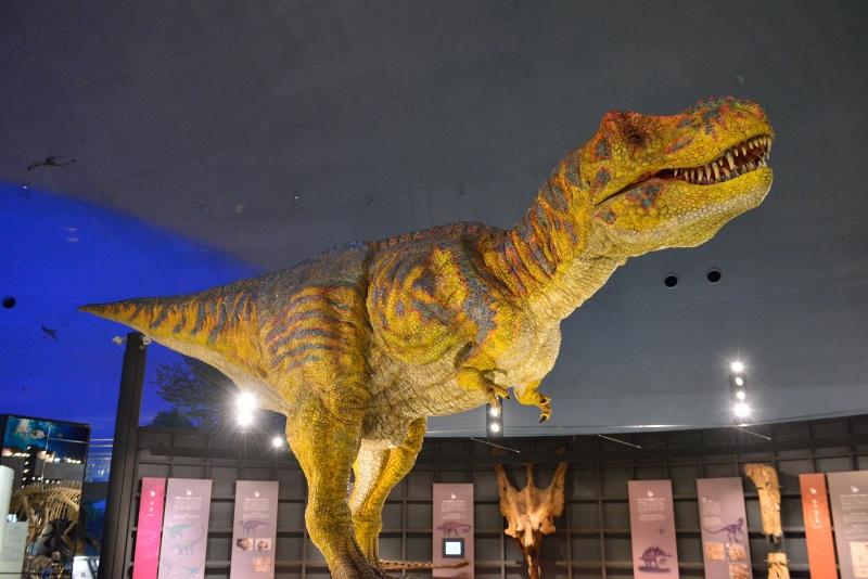 恐竜博物館 (11)