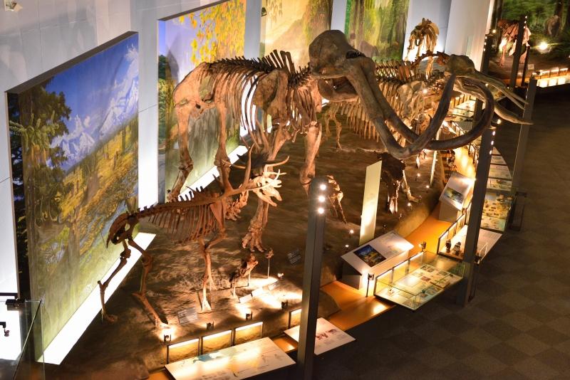 恐竜博物館 (9)