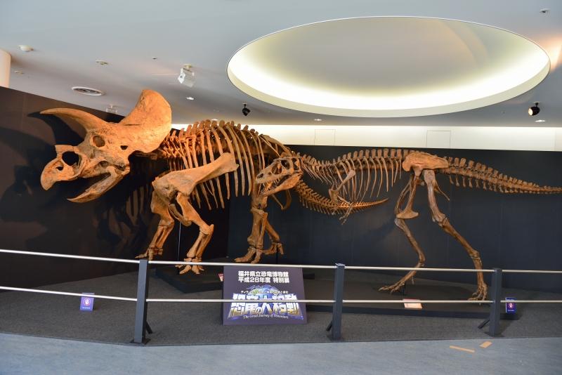 恐竜博物館 (7)