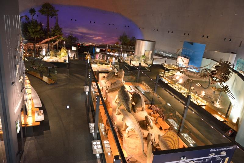 恐竜博物館 (8)