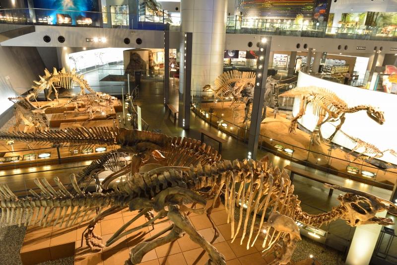 恐竜博物館 (14)