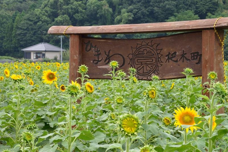 ひまわり園 (1)