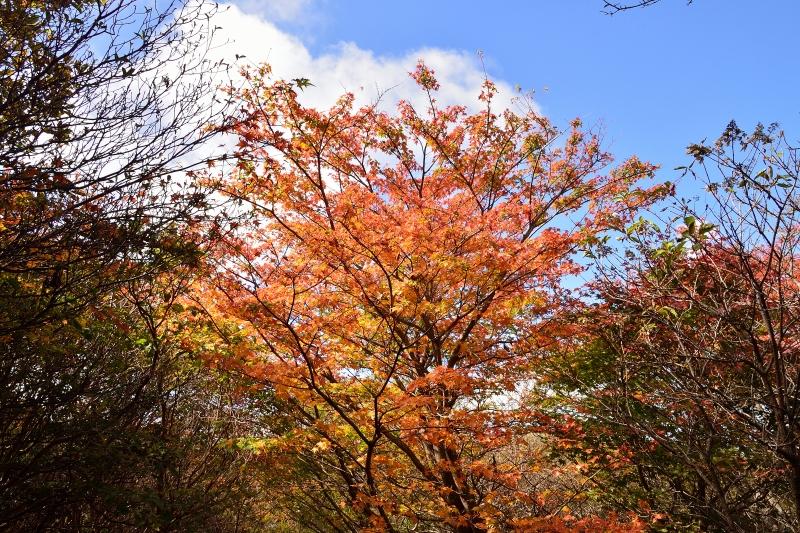 沓掛山 (15)