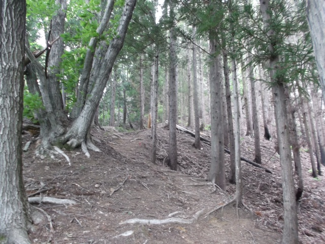 杉林の登山道