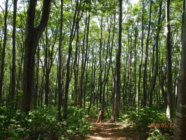 清々しいブナ林