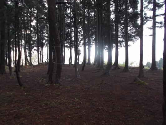 杉林の広場が山頂