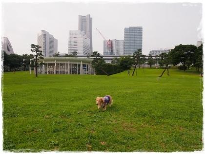 201610臨港Park-16