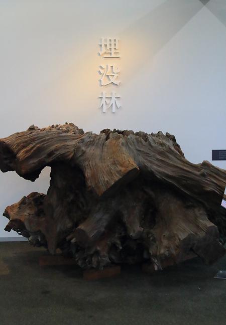 20160918埋没林博物館