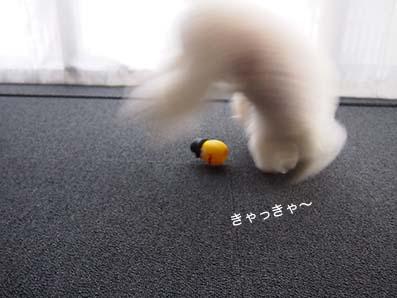 161025_10.jpg