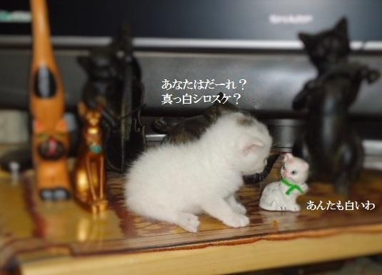 10実家猫