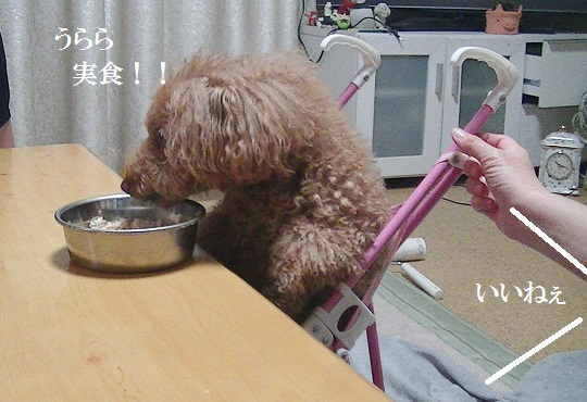 PIC_1489.jpg