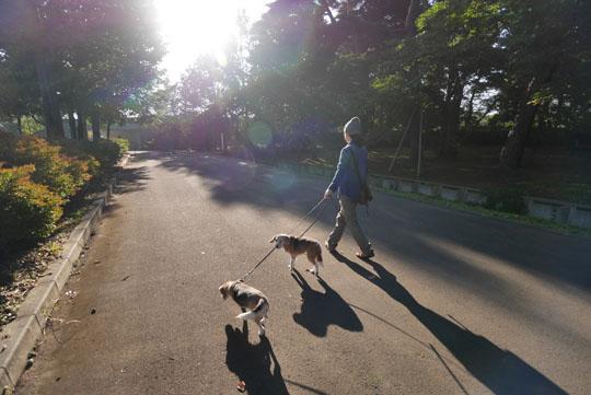 003朝の散歩へ