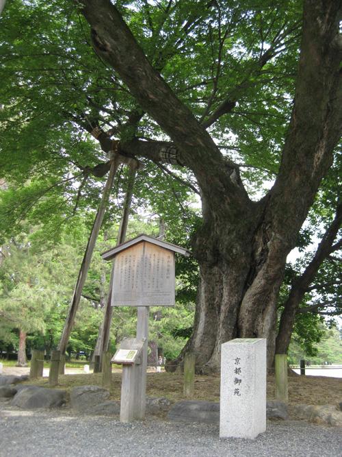 京都御所01-10
