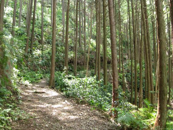 熊野古道・三浦峠道(熊ケ谷道)02-08