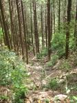 熊野古道・三浦峠道(熊ケ谷道)03-03