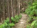熊野古道・三浦峠道(熊ケ谷道)03-16