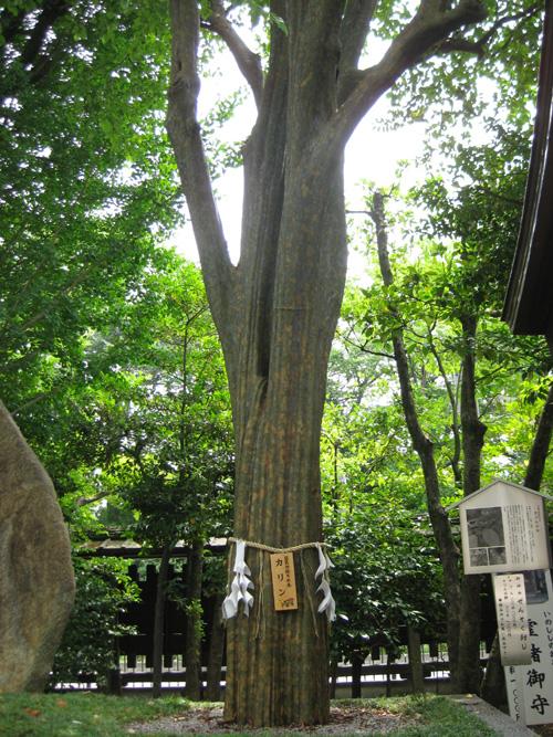 護王神社(京都)02-02