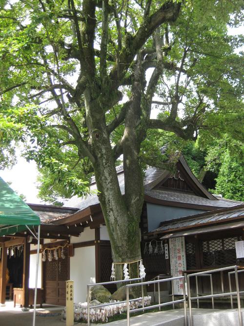 護王神社(京都)02-09