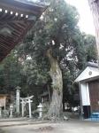 松尾神社(滋賀)11