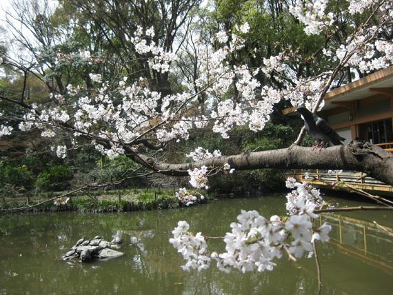 熱田神宮・清め茶屋08