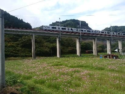 2016.10.27 コスモス畑