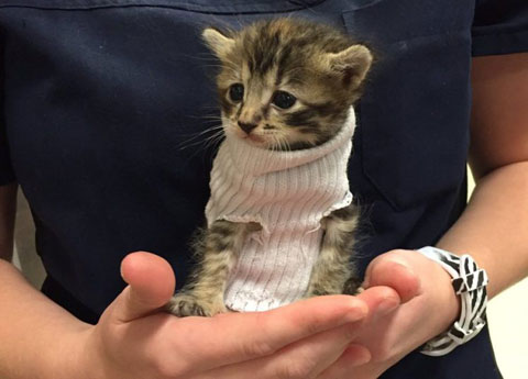 kitten-in-a-sock-jumper-3-e1476198266425
