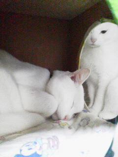 白猫タワー2
