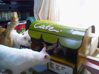 白猫ゾロゾロ