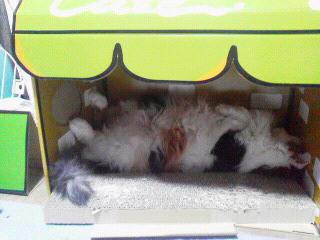 店長の午睡