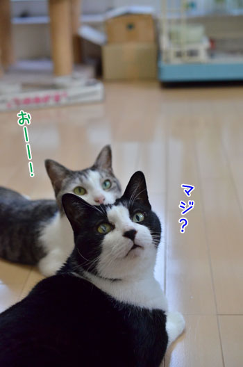 DSC_6379_2_201610212005353a0.jpg