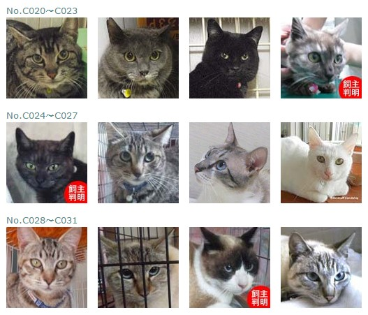 福島保護猫2