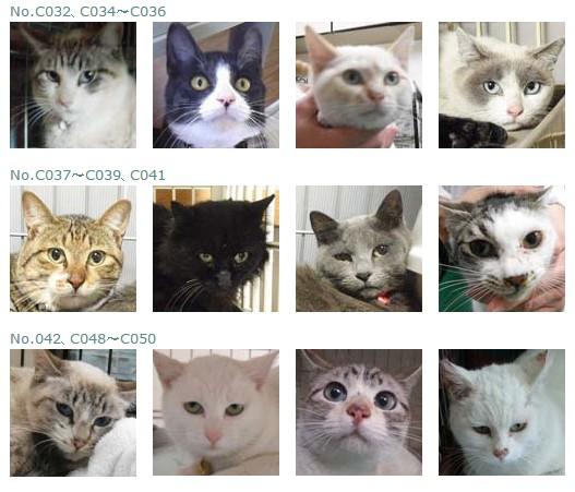 福島保護猫3