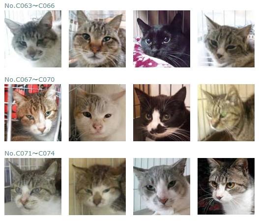 福島保護猫5