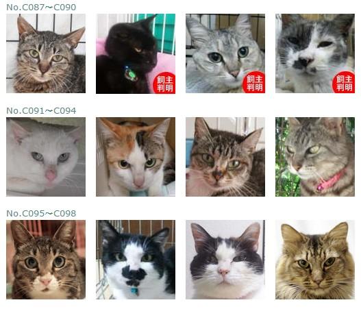 福島保護猫7