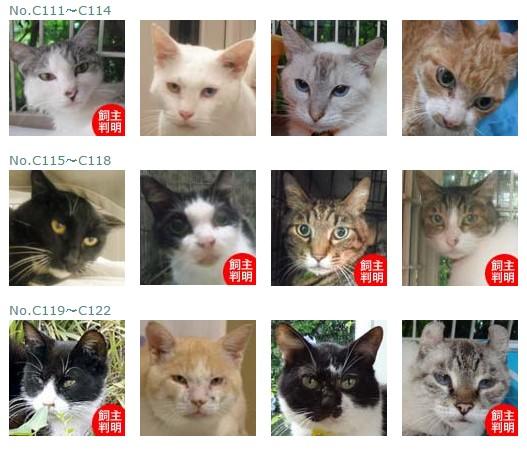 福島保護猫9